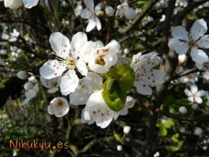 florecillas guachis